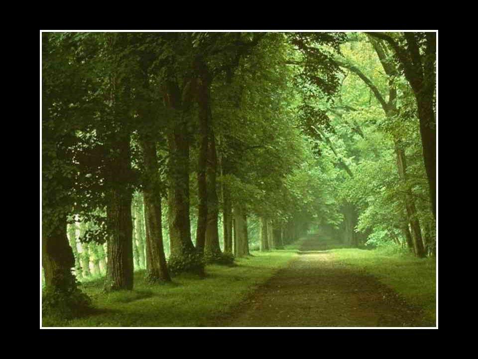 Il était une fois, sur une montagne, trois arbres qui partageaient leurs rêves et leurs espoirs. Le premier dit: