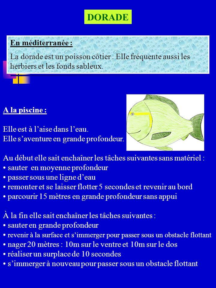 GRANDE ETOILE DE MER En méditerranée : Cest un animal marin à 5 bras.