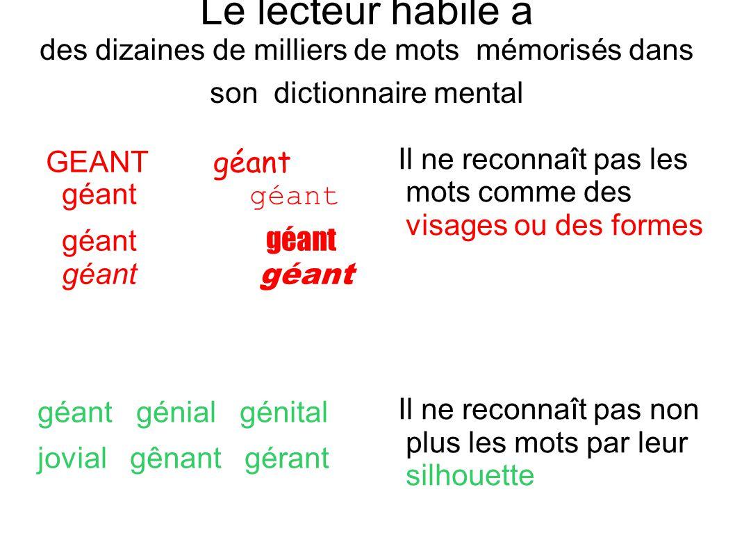 Le lecteur habile a des dizaines de milliers de mots mémorisés dans son dictionnaire mental GEANT géant géant géant géant géant géant géant géant géni
