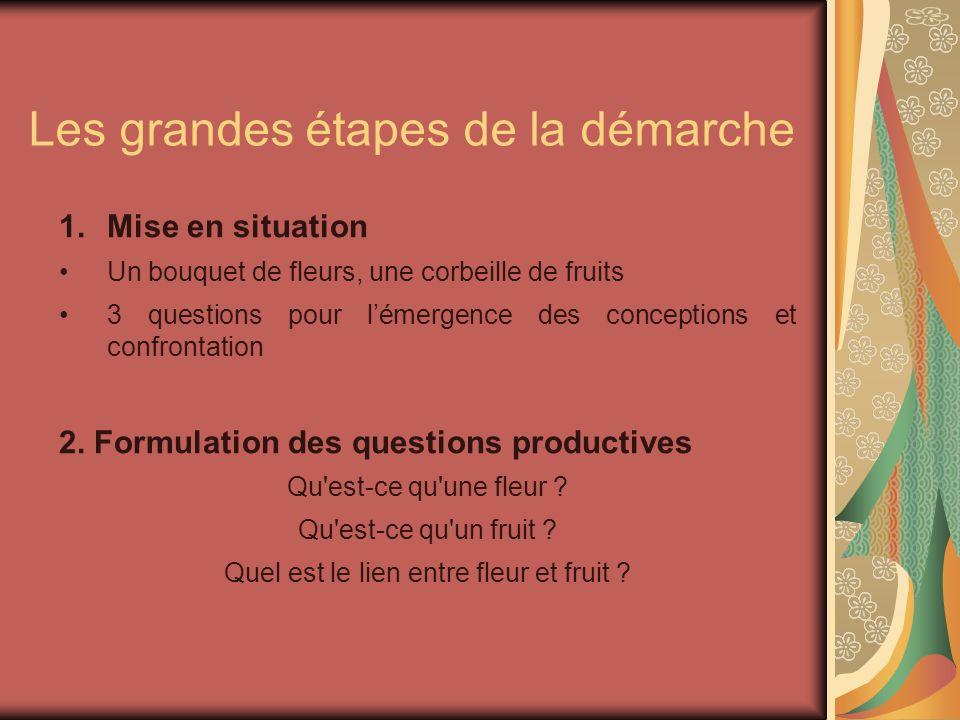 Les grandes étapes de la démarche 1.Mise en situation Un bouquet de fleurs, une corbeille de fruits 3 questions pour lémergence des conceptions et con
