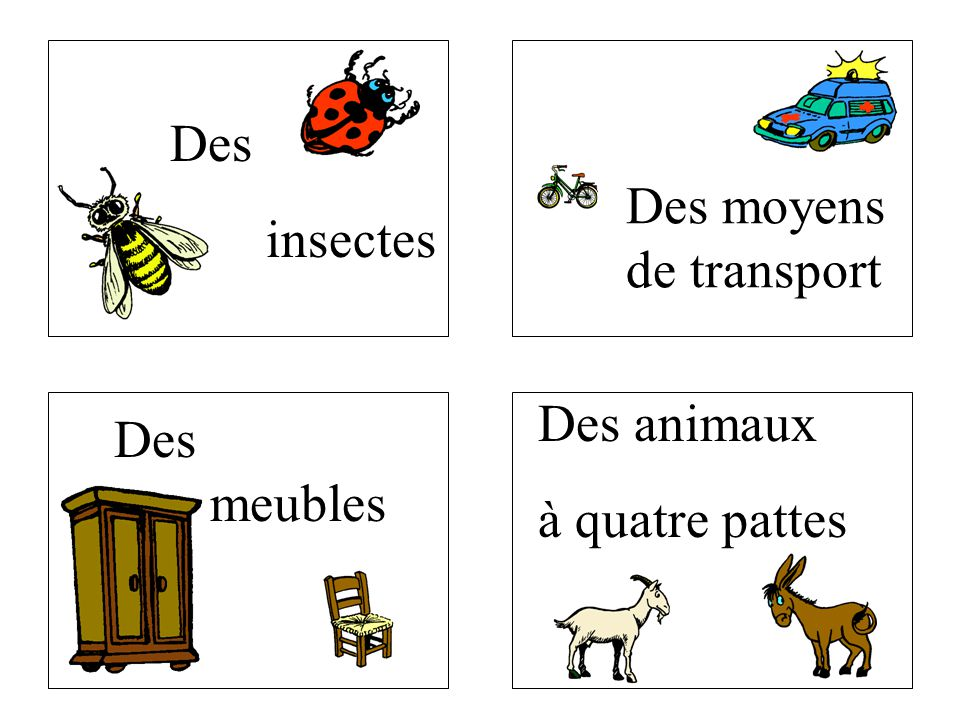 Des meubles Des insectes Des moyens de transport Des animaux à quatre pattes