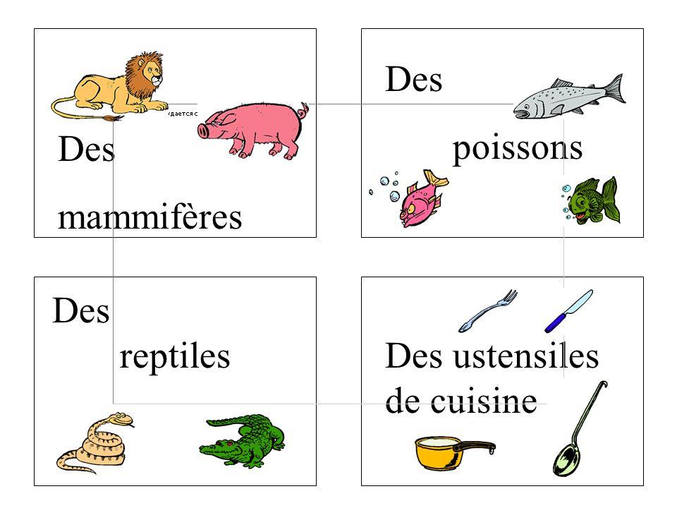 Des reptiles Des mammifères Des poissons Des ustensiles de cuisine
