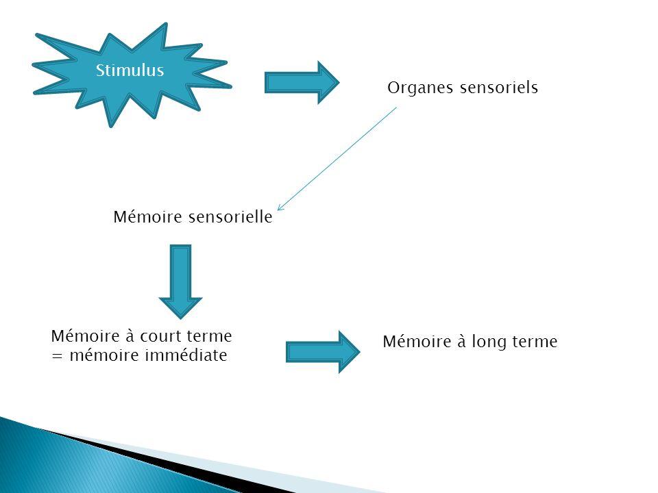Stimulus Organes sensoriels Mémoire sensorielle Mémoire à court terme = mémoire immédiate Mémoire à long terme