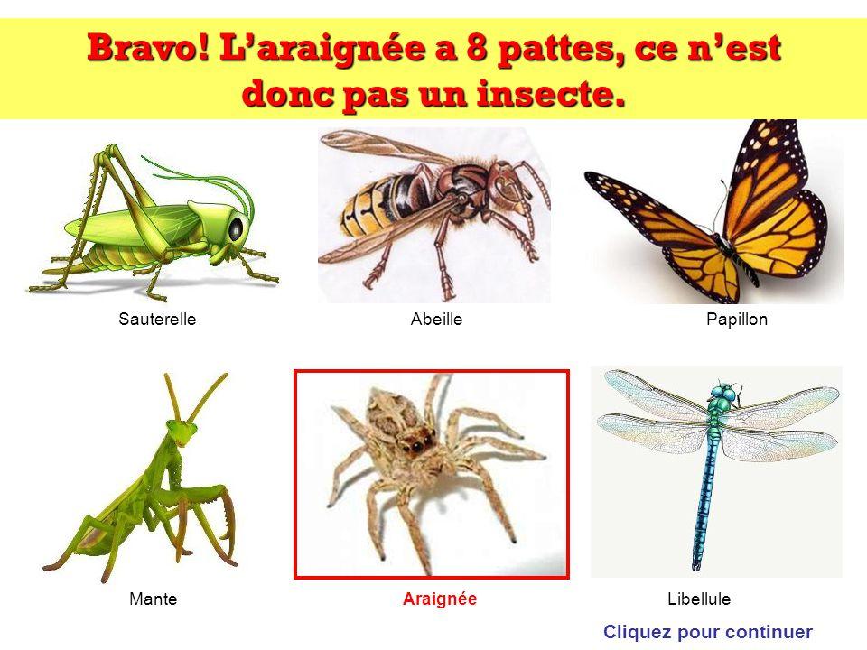 Trouvez lintrus: Cliquez sur lintrus SauterelleAbeillePapillon ManteLibelluleAraignée
