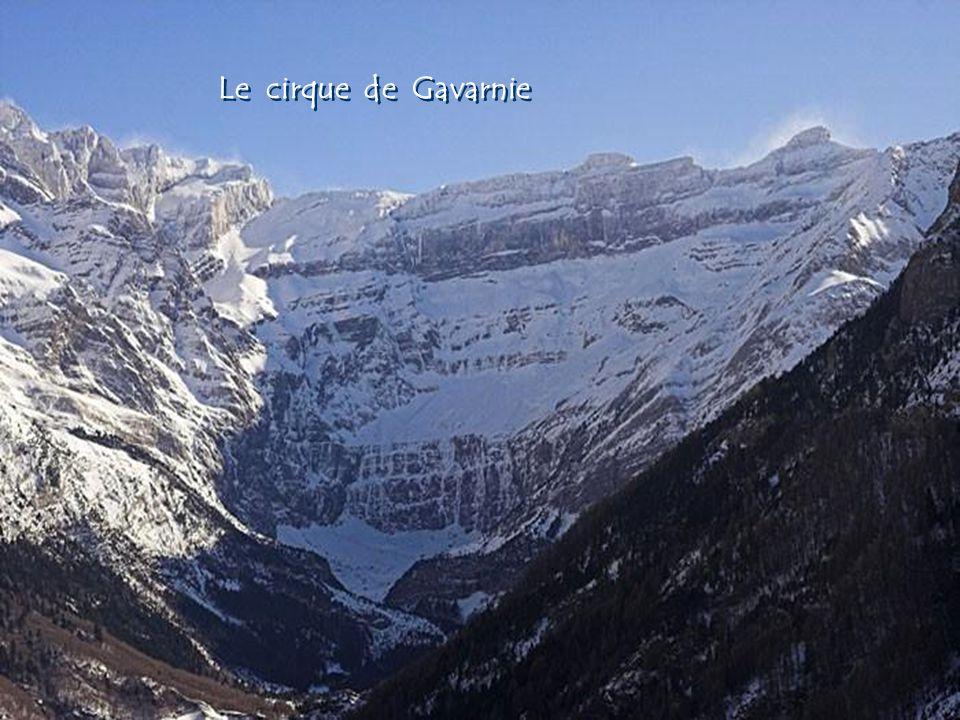Le Patou Lours des Pyrénées