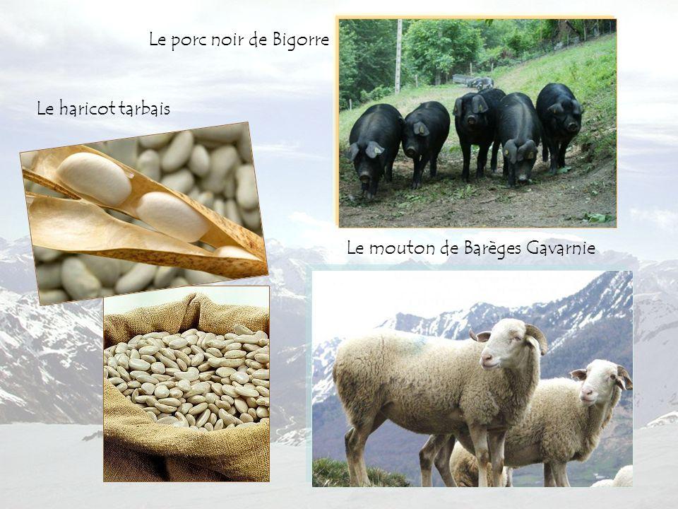 L'oignon de Trébons Le vin de Madiran Le gâteau à la broche Spécialités de la Bigorre