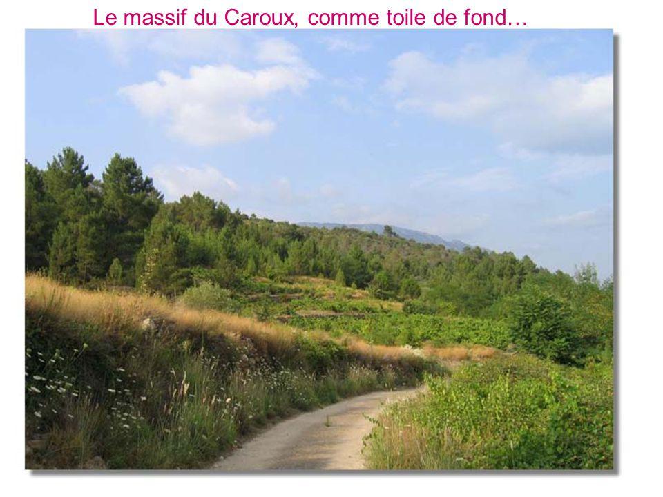 Le massif du Caroux, comme toile de fond…