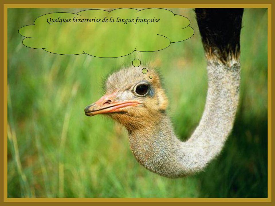 Quelques bizarreries de la langue française