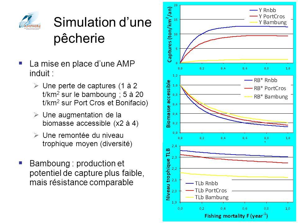 Conférences Aquarium Porte Dorée 2012 Simulation dune pêcherie La mise en place dune AMP induit : Une perte de captures (1 à 2 t/km 2 sur le bamboung