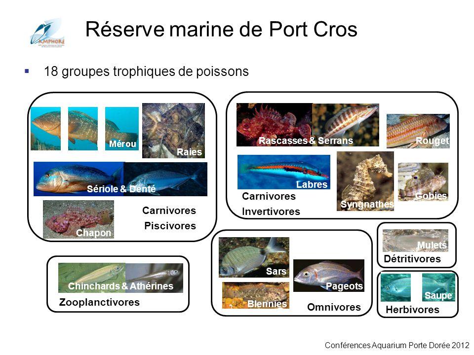 Conférences Aquarium Porte Dorée 2012 Saupe 18 groupes trophiques de poissons Mérou Raies Sériole & Denté Chapon Zooplanctivores Chinchards & Athérine