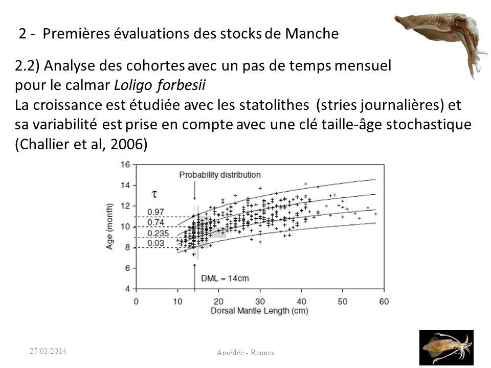 2 - Premières évaluations des stocks de Manche 12 Amédée - Rennes 27/03/2014 2.2) Analyse des cohortes avec un pas de temps mensuel pour le calmar Loligo forbesii La croissance est étudiée avec les statolithes (stries journalières) et sa variabilité est prise en compte avec une clé taille-âge stochastique (Challier et al, 2006)