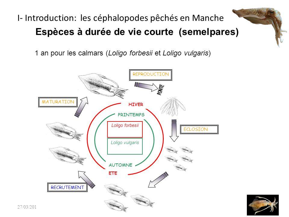 37 # standardisation des LPUE Script Data Package Graphiquesindicateurs -Taux dexploitation -B 1 et B 2 -Coefficient de capturabilité delta.glm() two.stage.model.fit() two.stage.model.ouputs() + Importation -CEFAS -Ifremer # Ajustement du modèle # Calculs des sorties # Graphiques résultats Importation -BTS -CGFS Rennes 27/03/2014 3 - Développements actuels : Le modèle de biomasse à deux stades pour la seiche