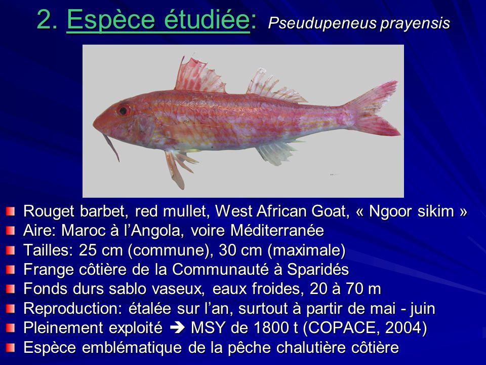 2. Espèce étudiée: Pseudupeneus prayensis Rouget barbet, red mullet, West African Goat, « Ngoor sikim » Aire: Maroc à lAngola, voire Méditerranée Tail
