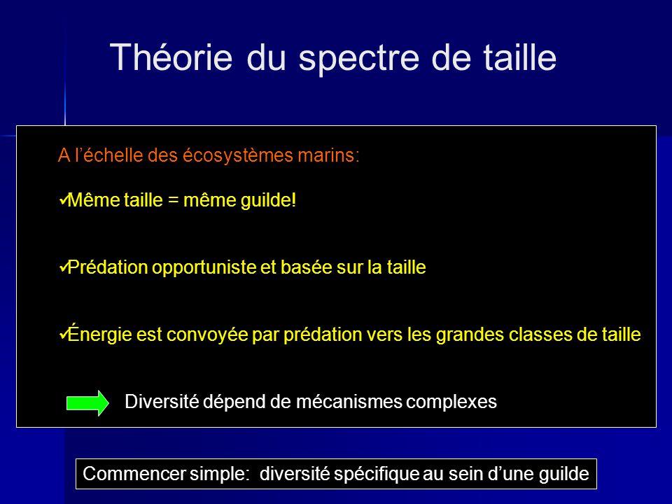 Théorie du spectre de taille Commencer simple: diversité spécifique au sein dune guilde A léchelle des écosystèmes marins: Même taille = même guilde.