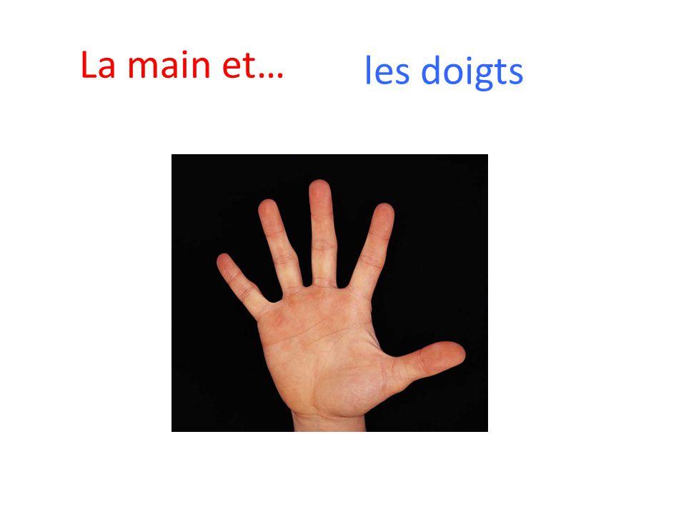 La main et… les doigts