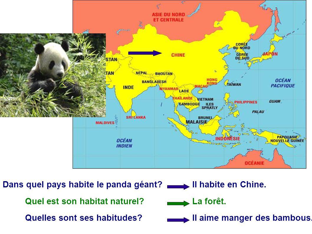 Dans quel pays habite le panda géant? Il habite en Chine. Quel est son habitat naturel?La forêt. Quelles sont ses habitudes?Il aime manger des bambous