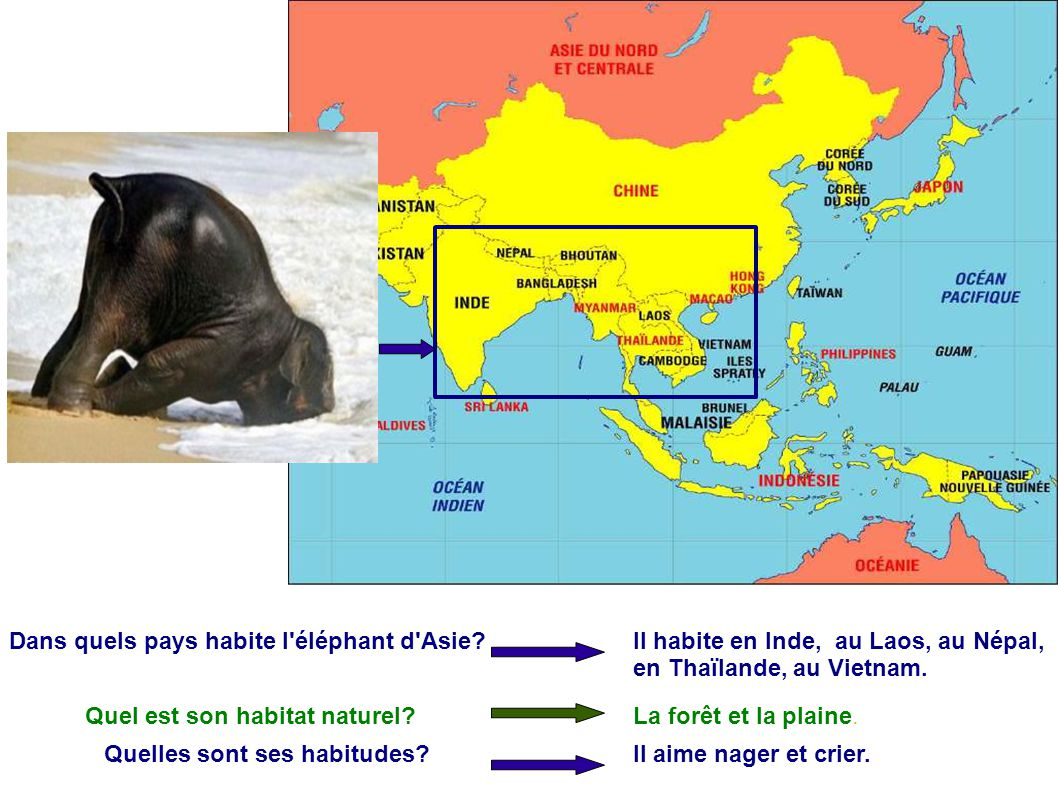 Dans quels pays habite l'éléphant d'Asie? Il habite en Inde, au Laos, au Népal, en Thaϊlande, au Vietnam. Quel est son habitat naturel?La forêt et la
