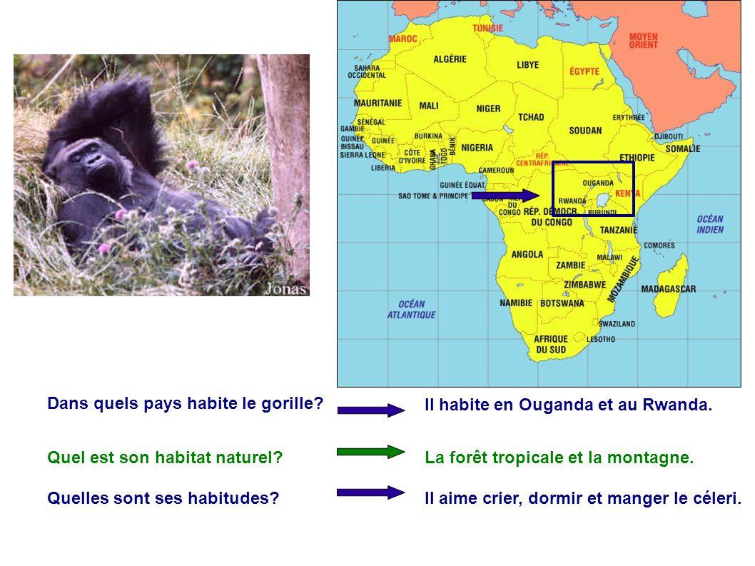 Dans quels pays habite le gorille? Il habite en Ouganda et au Rwanda. Quel est son habitat naturel?La forêt tropicale et la montagne. Quelles sont ses