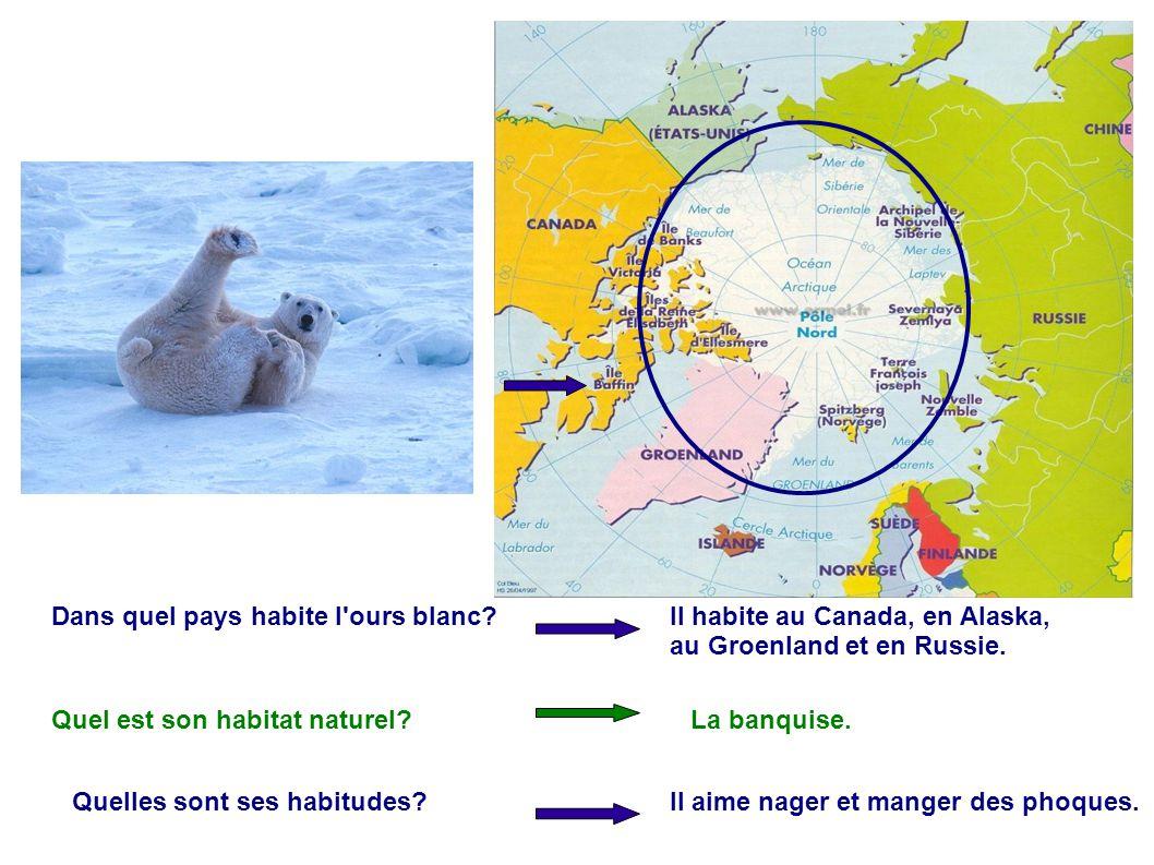 Dans quel pays habite l'ours blanc? Il habite au Canada, en Alaska, au Groenland et en Russie. Quel est son habitat naturel?La banquise. Quelles sont