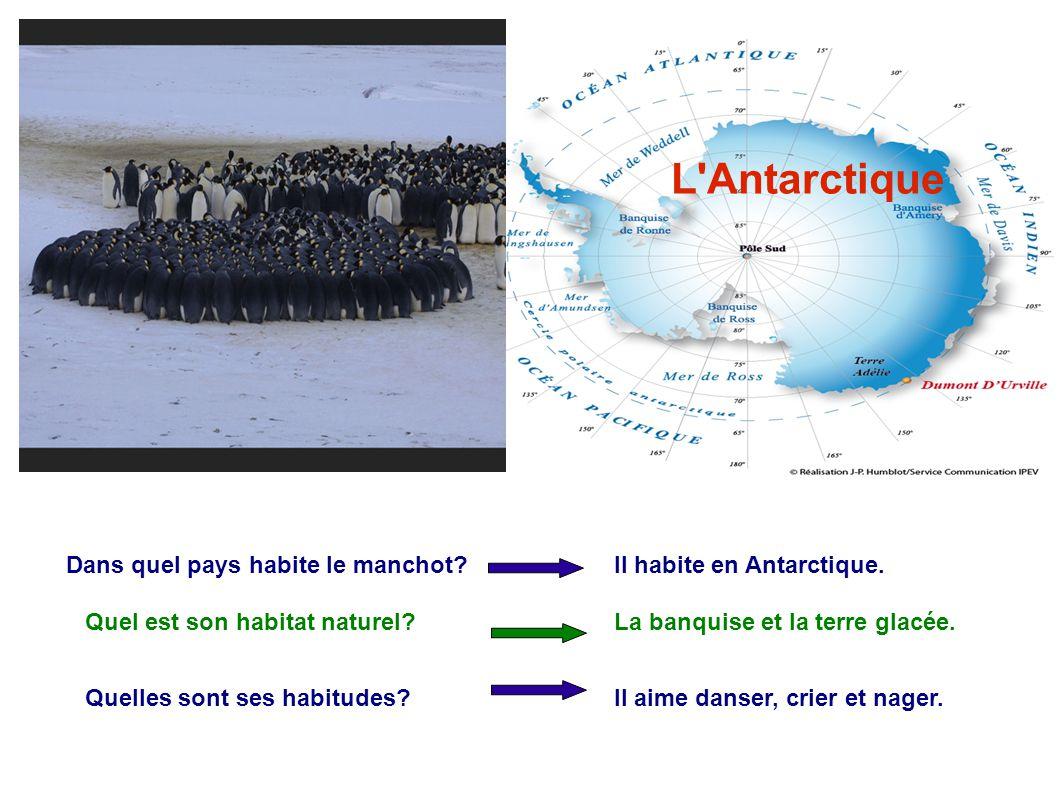 L'Antarctique Dans quel pays habite le manchot? Il habite en Antarctique. Quel est son habitat naturel?La banquise et la terre glacée. Quelles sont se