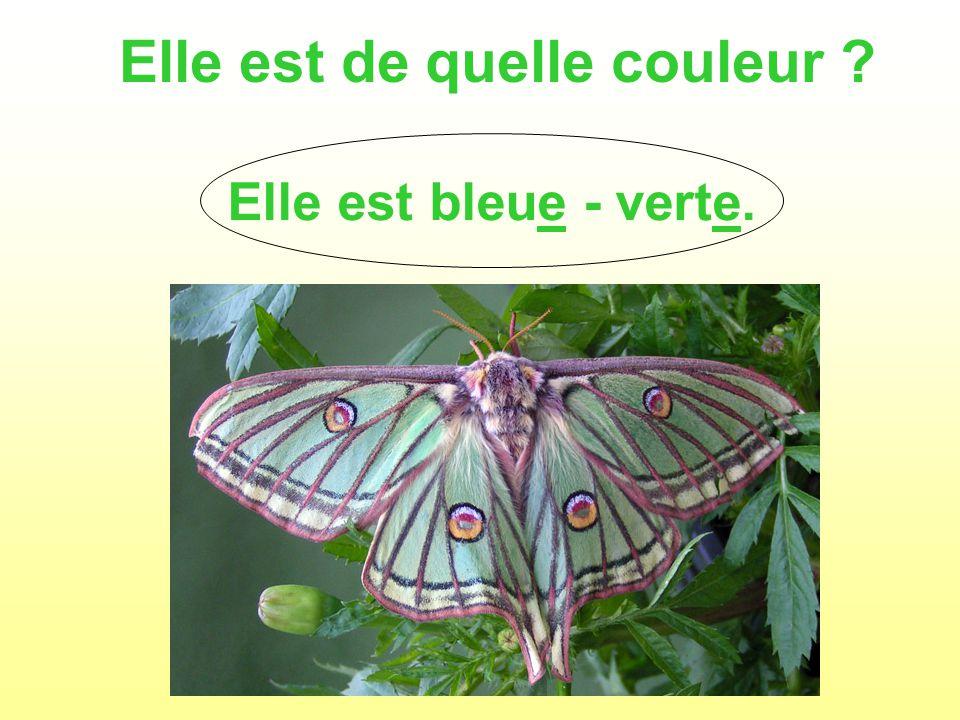 Elle est de quelle couleur Elle est bleue - verte.