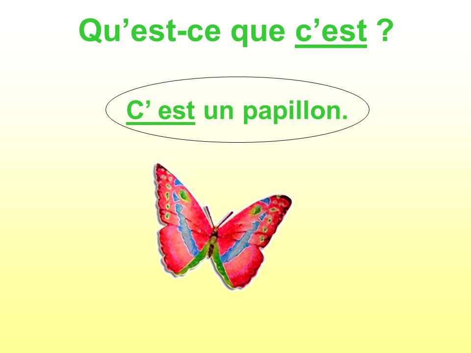 Quest-ce que cest C est un papillon.
