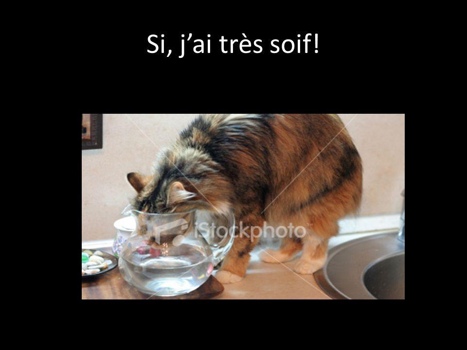 Si, jai très soif!