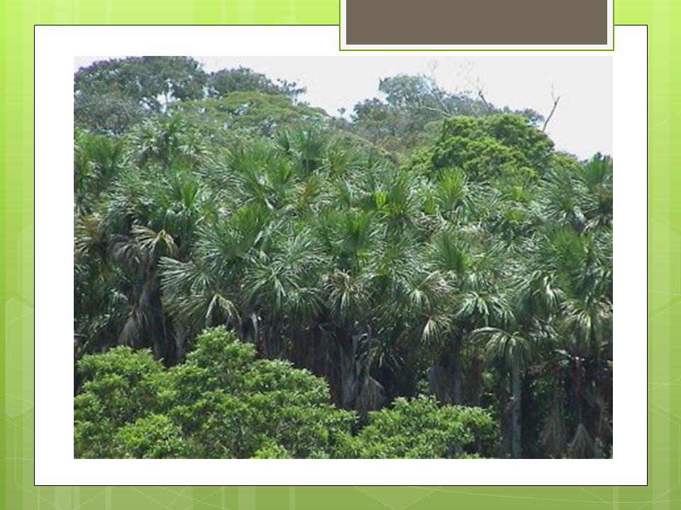 La végétation tropicale