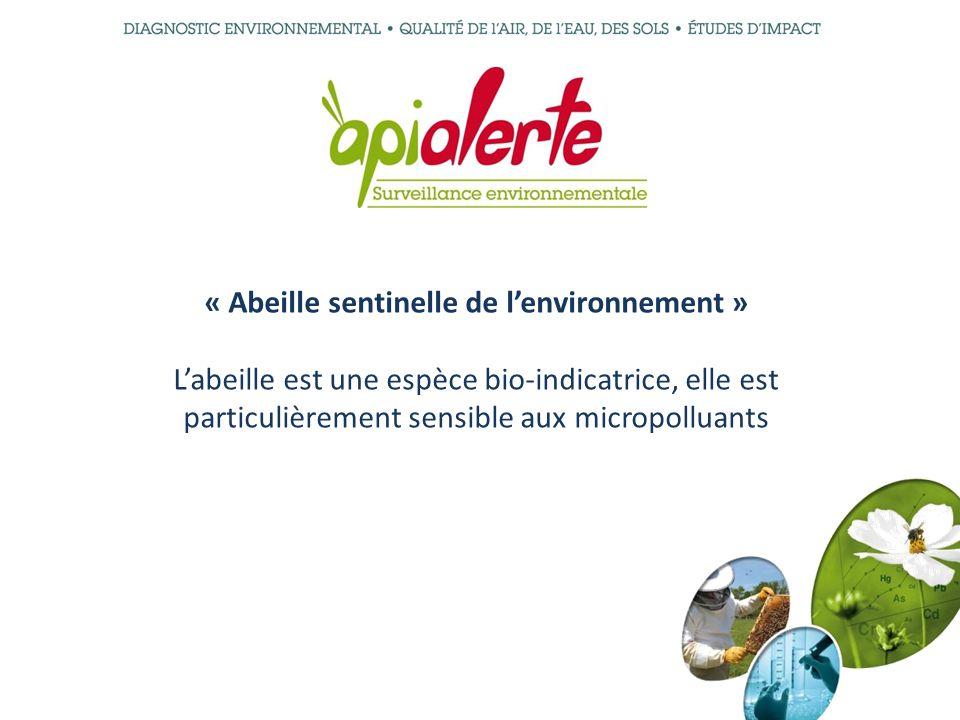 « Abeille sentinelle de lenvironnement » Labeille est une espèce bio-indicatrice, elle est particulièrement sensible aux micropolluants