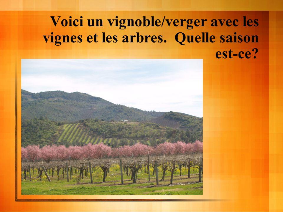 Voici un vignoble/verger avec les vignes et les arbres. Quelle saison est-ce?