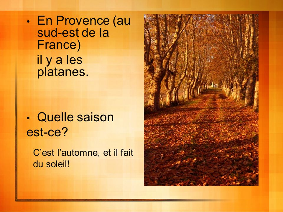 En Provence (au sud-est de la France) il y a les platanes. Quelle saison est-ce? Cest lautomne, et il fait du soleil!