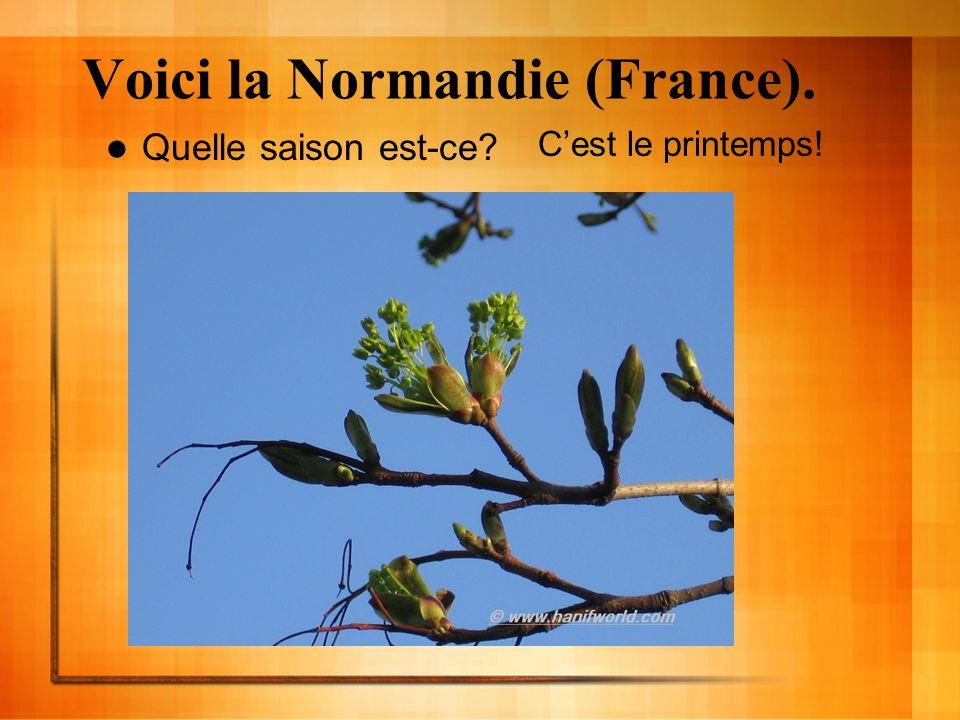 Voici la Normandie (France). Quelle saison est-ce? Cest le printemps!