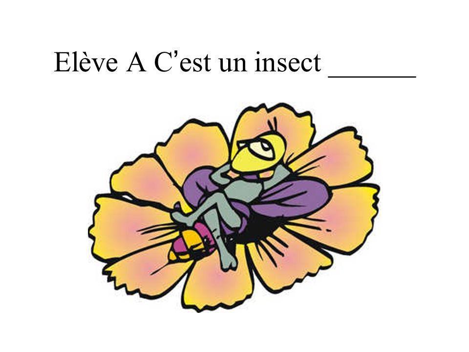 Elève A C est un insect ______