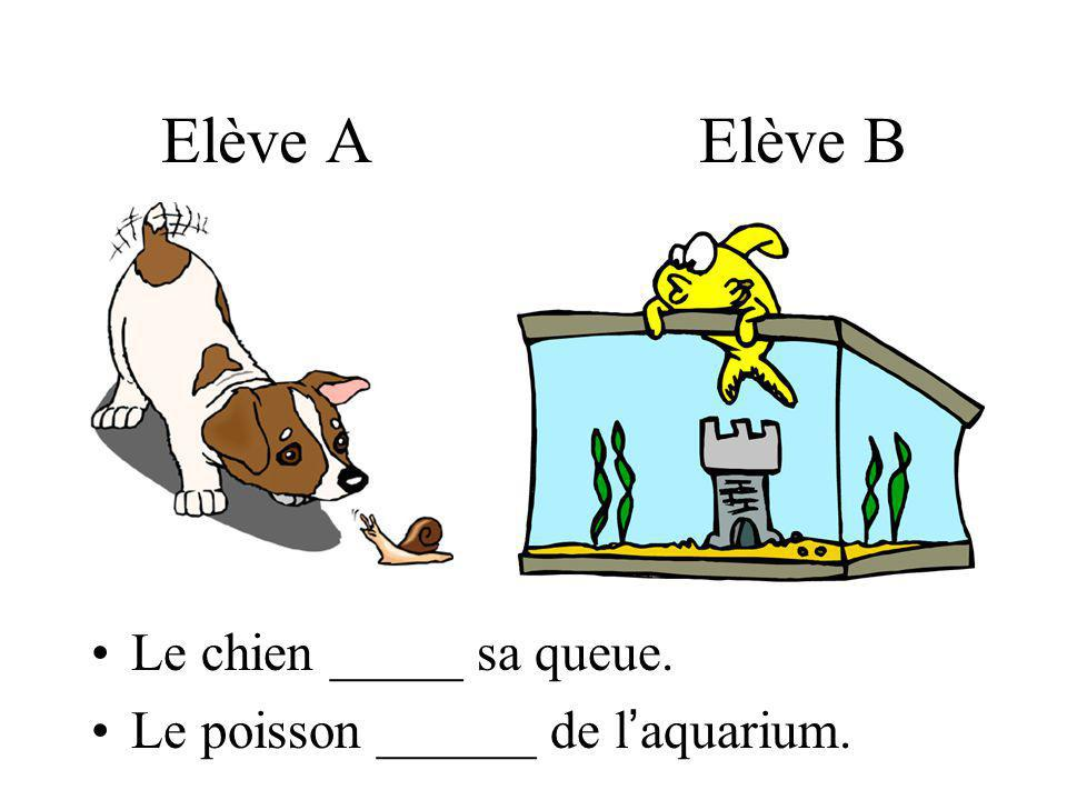 Elève A Elève B Le chien _____ sa queue. Le poisson ______ de l aquarium.