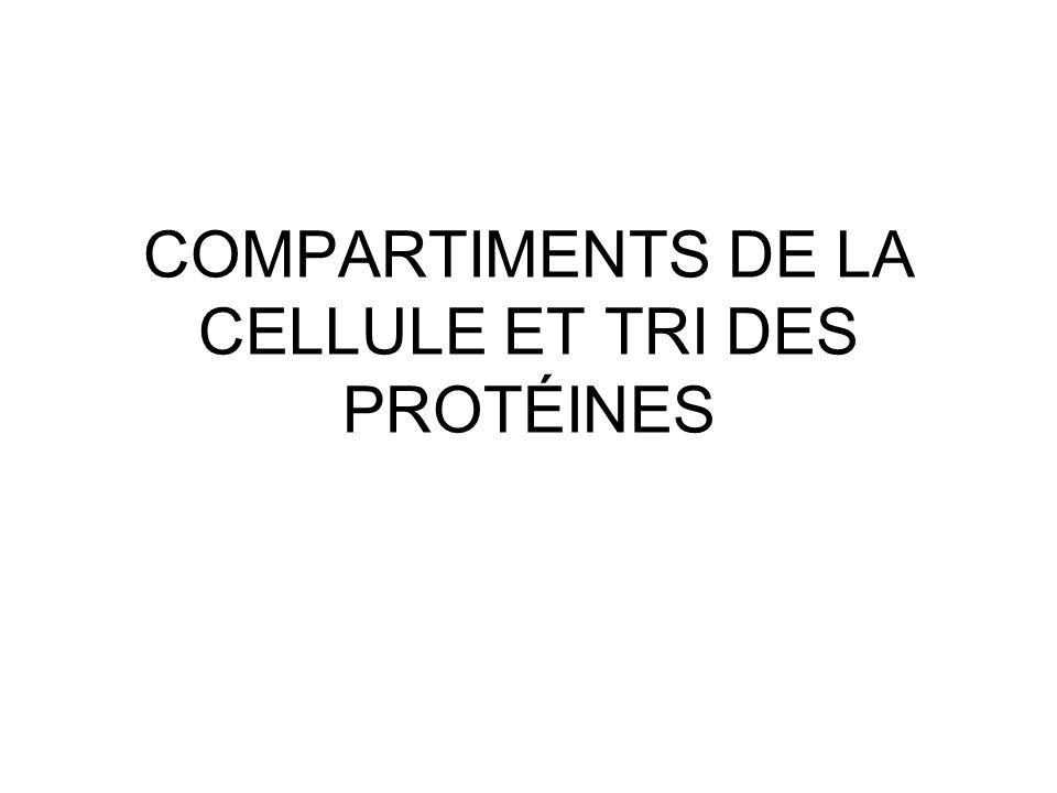 32 Import des protéines peroxysomales Le ciblage est toujours post traductionnel Ciblage des protéines membranaires (membrane Peroxysomal Targeting Signal [mPTS]) : –directement à partir du cytosol (mPTS1) ou –indirectement via le RE (mPTS2) La machine d importation pour la membrane est différente de celle pour la matrice Les protéines de la matrice ont besoin de mPTS 1 et mPTS 2 L import dans la membrane et la matrice est médiée par leur récepteur qui agit avec le PTS de leur cargo