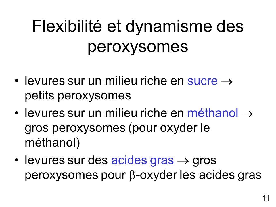 11 Flexibilité et dynamisme des peroxysomes levures sur un milieu riche en sucre petits peroxysomes levures sur un milieu riche en méthanol gros perox
