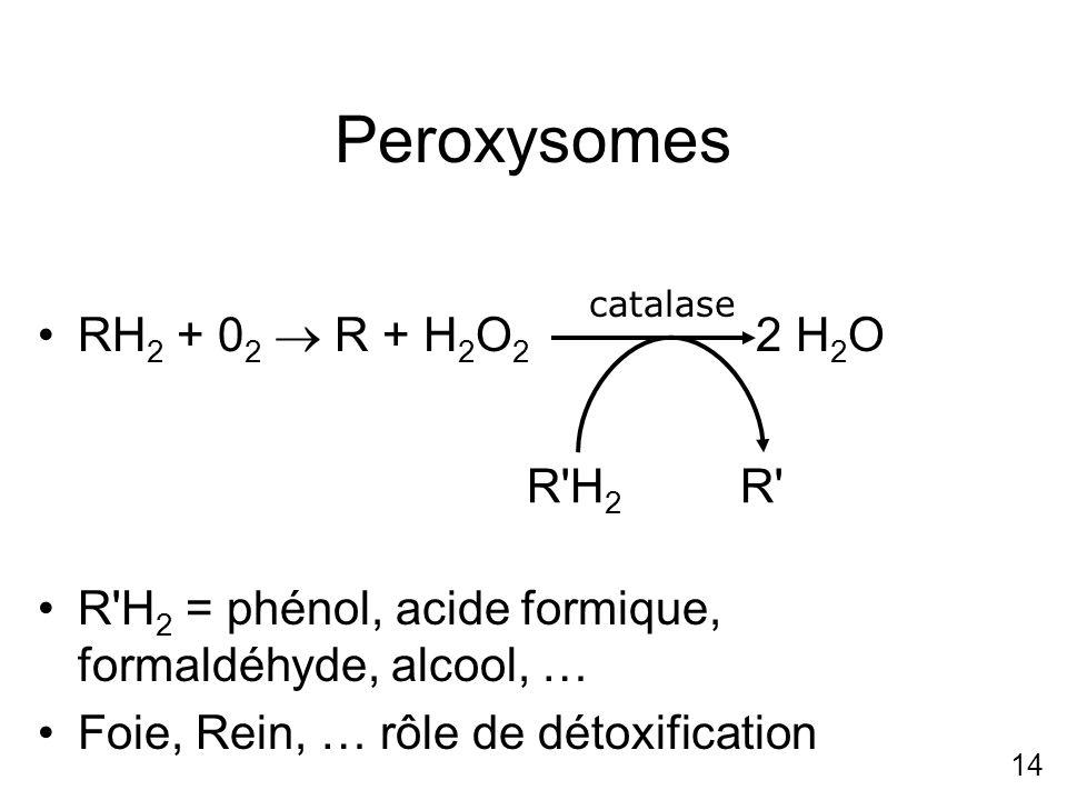 14 Peroxysomes RH 2 + 0 2 R + H 2 O 2 2 H 2 O R'H 2 = phénol, acide formique, formaldéhyde, alcool, … Foie, Rein, … rôle de détoxification catalase R'