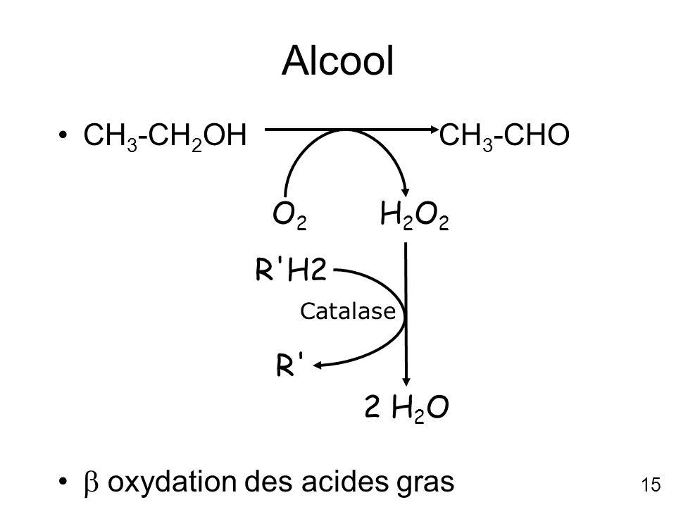 15 Alcool CH 3 -CH 2 OH CH 3 -CHO oxydation des acides gras O2O2 H2O2H2O2 2 H 2 O Catalase R'H2 R'