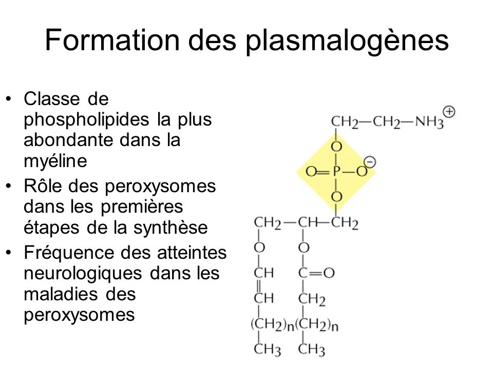 16 Formation des plasmalogènes Classe de phospholipides la plus abondante dans la myéline Rôle des peroxysomes dans les premières étapes de la synthès