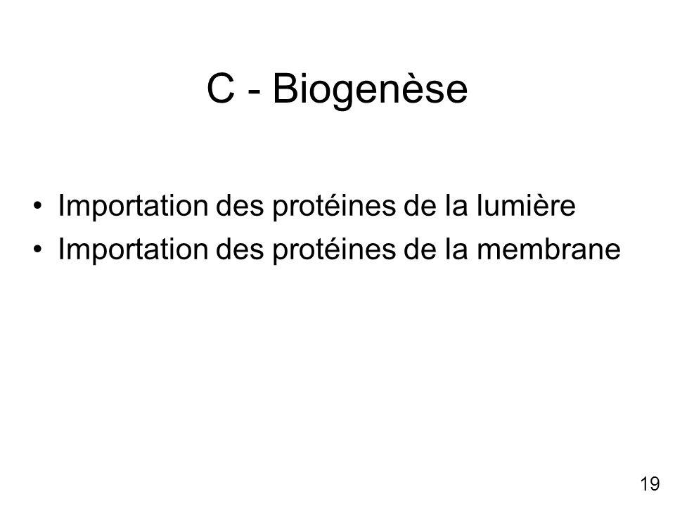 19 C - Biogenèse Importation des protéines de la lumière Importation des protéines de la membrane