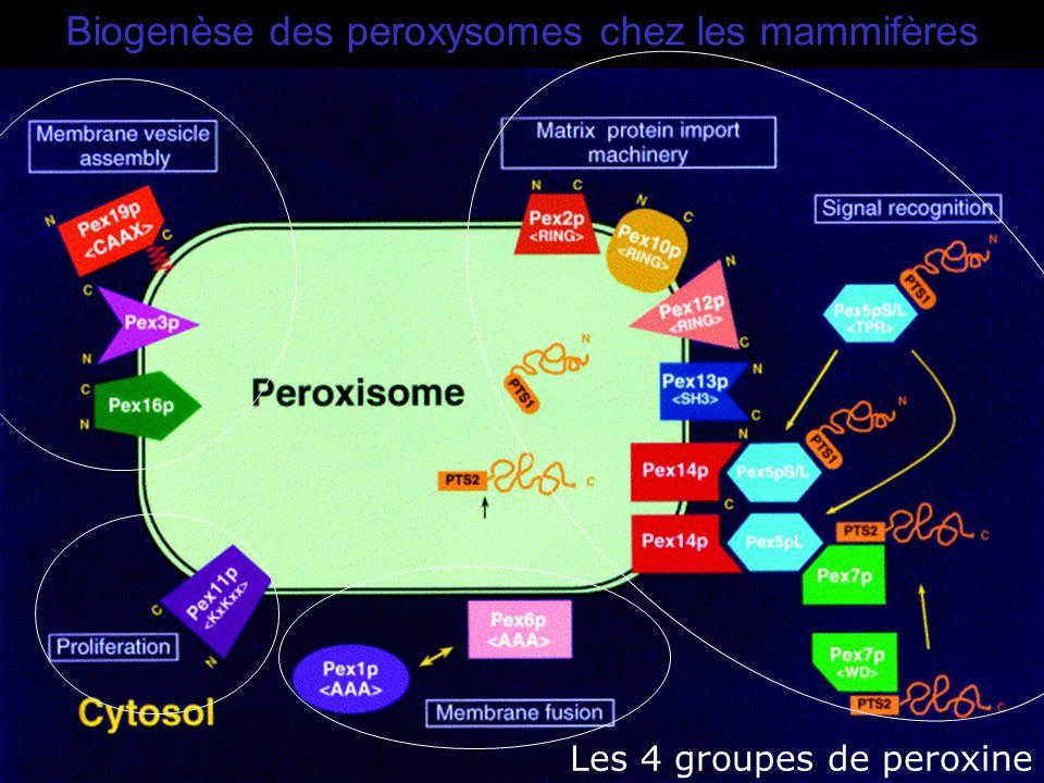 39 Fujiki,Y2000(Fig1) Biogenèse des peroxysomes chez les mammifères Les 4 groupes de peroxine