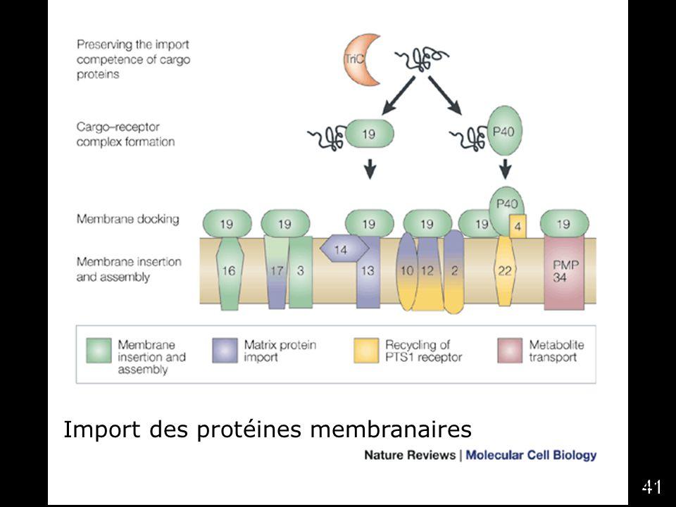 41 Titorenko,VI2001 (fig2) Nat Rev Mol Cell Biol 2,(5), 357 Import des protéines membranaires