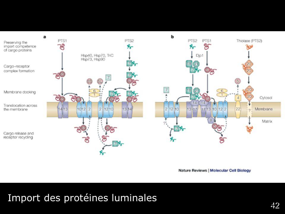 42 Import des protéines luminales Titorenko,VI2001 (fig3) Nat Rev Mol Cell Biol 2,(5), 357