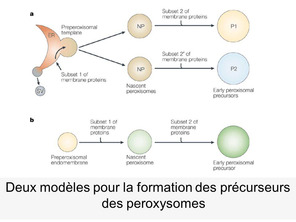 44 Titorenko,VI2001(fig5) Nat Rev Mol Cell Biol 2,(5), 357 Deux modèles pour la formation des précurseurs des peroxysomes