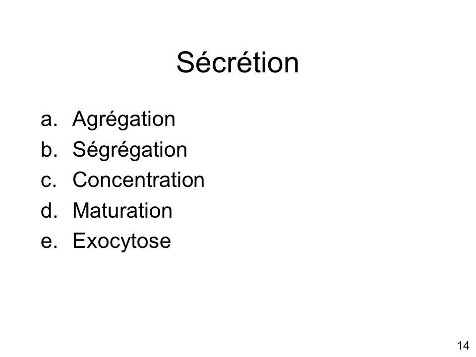 14 Sécrétion a.Agrégation b.Ségrégation c.Concentration d.Maturation e.Exocytose