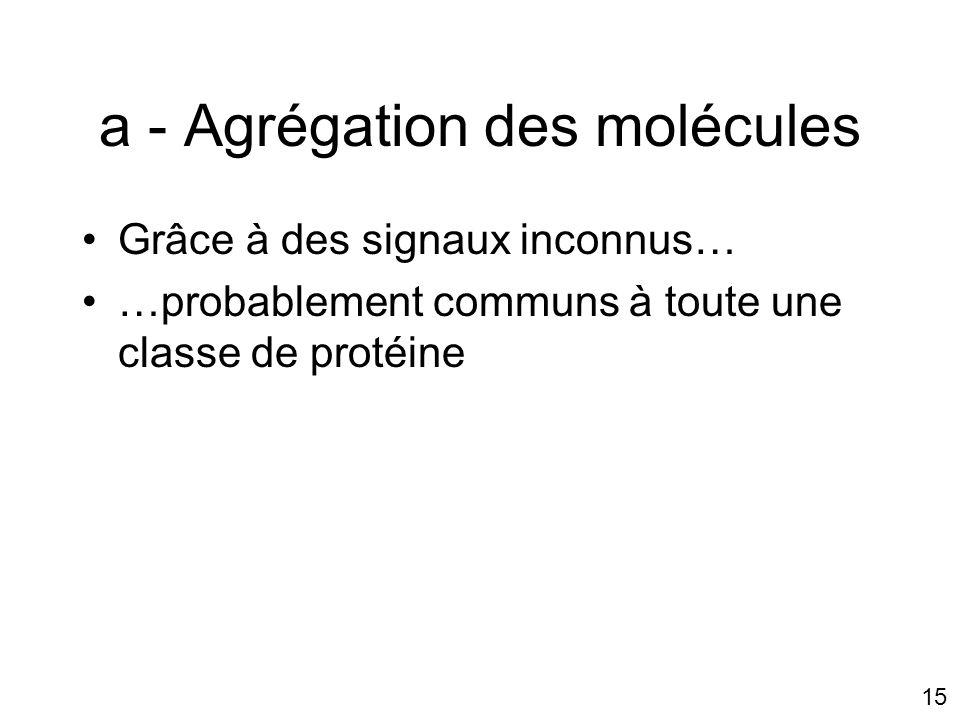 15 a - Agrégation des molécules Grâce à des signaux inconnus… …probablement communs à toute une classe de protéine