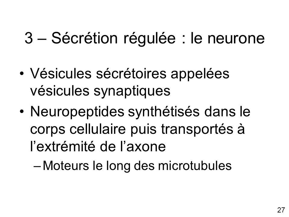 27 3 – Sécrétion régulée : le neurone Vésicules sécrétoires appelées vésicules synaptiques Neuropeptides synthétisés dans le corps cellulaire puis transportés à lextrémité de laxone –Moteurs le long des microtubules