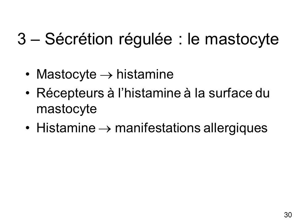 30 3 – Sécrétion régulée : le mastocyte Mastocyte histamine Récepteurs à lhistamine à la surface du mastocyte Histamine manifestations allergiques