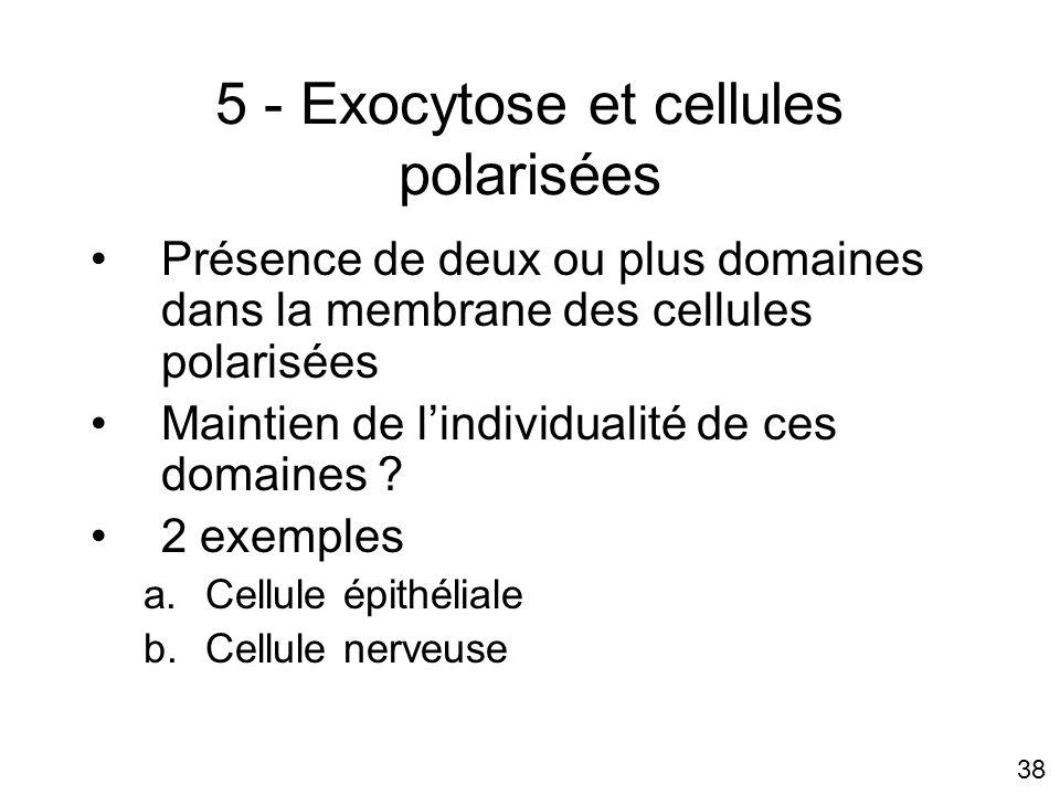 38 5 - Exocytose et cellules polarisées Présence de deux ou plus domaines dans la membrane des cellules polarisées Maintien de lindividualité de ces domaines .