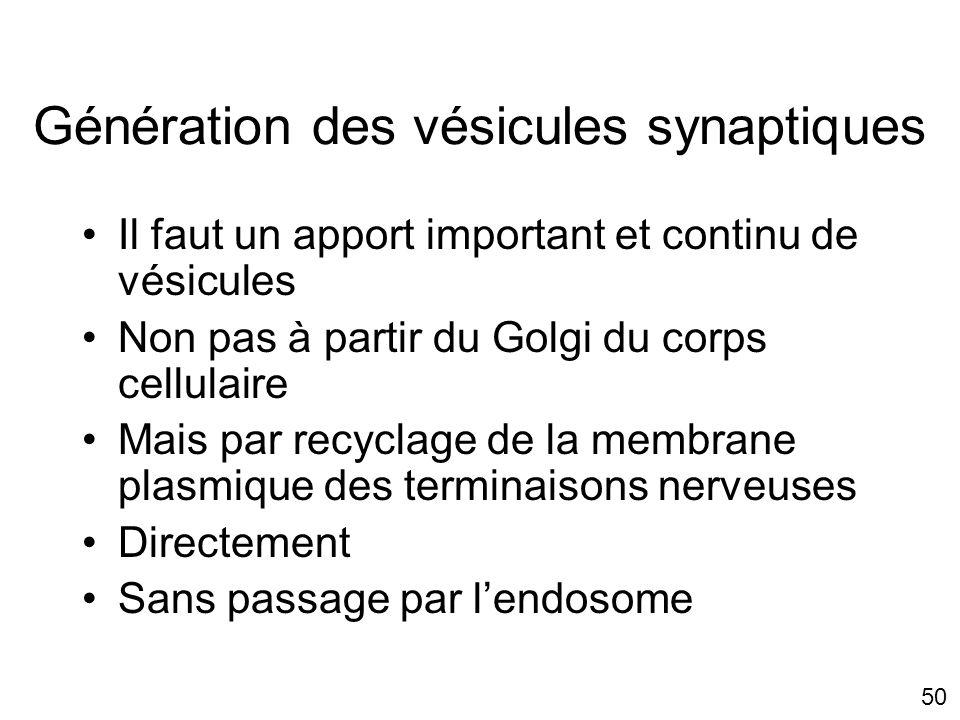 50 Génération des vésicules synaptiques Il faut un apport important et continu de vésicules Non pas à partir du Golgi du corps cellulaire Mais par recyclage de la membrane plasmique des terminaisons nerveuses Directement Sans passage par lendosome